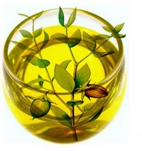 Jojoba Oil Uses & Benefits